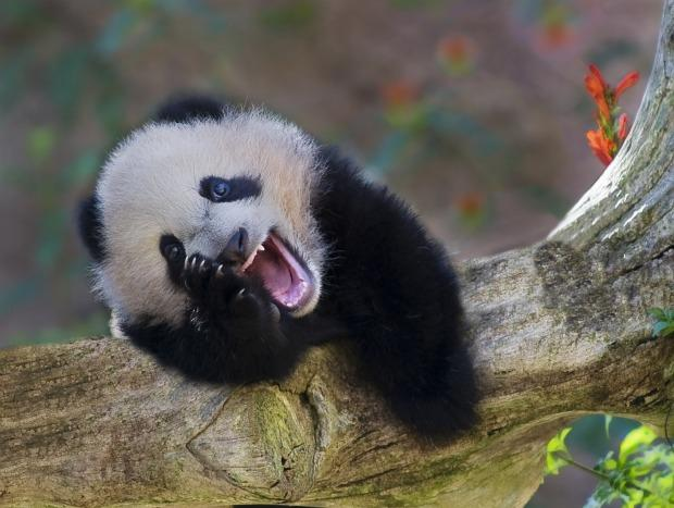 Image result for laughing animals