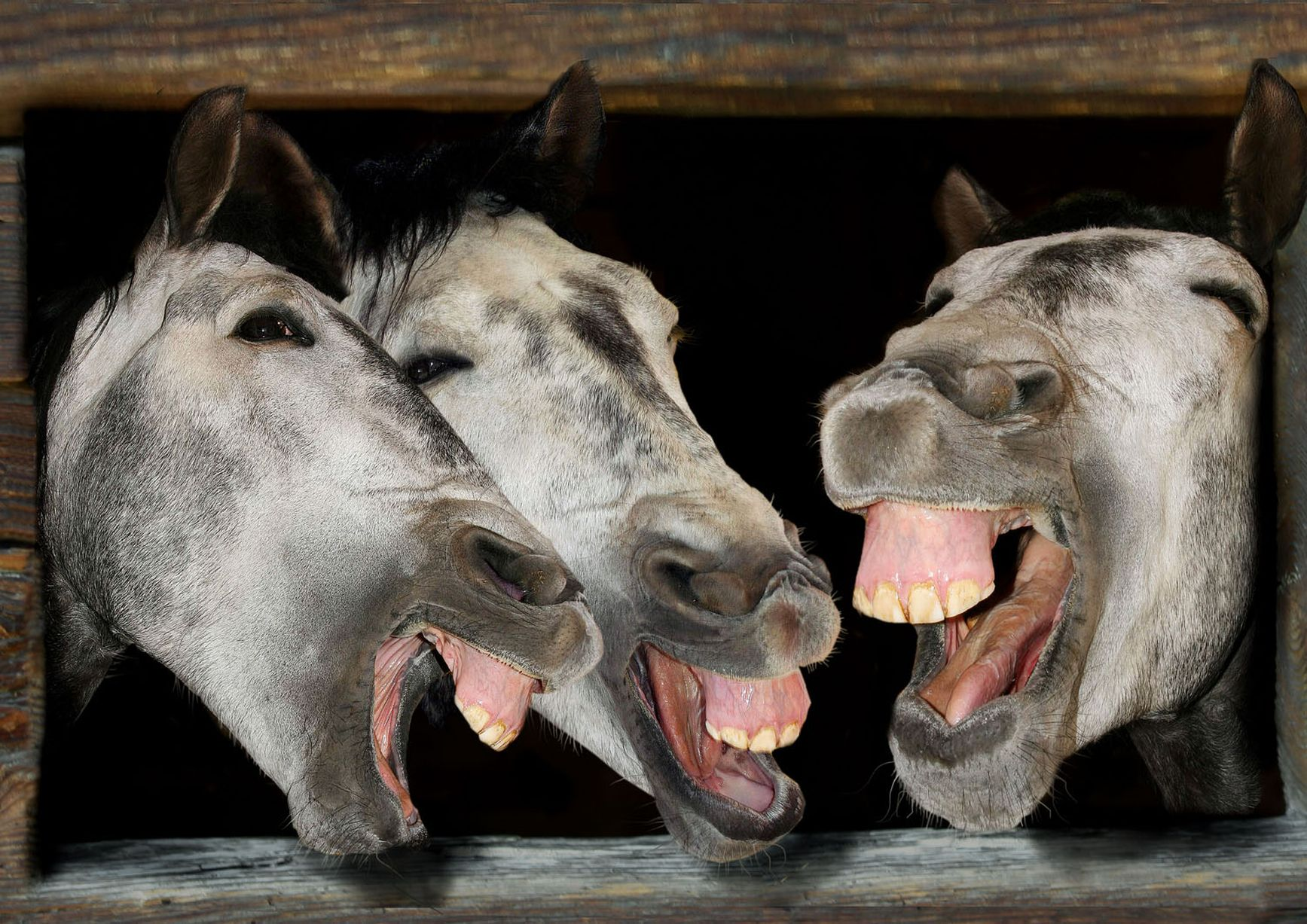 12 Amazing Pictures of Animals Laughing | Major10 - photo#22